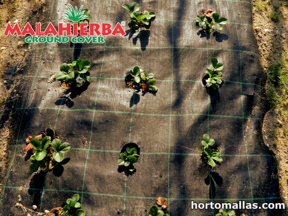 mala anti maleza instalada en campo de cultivo