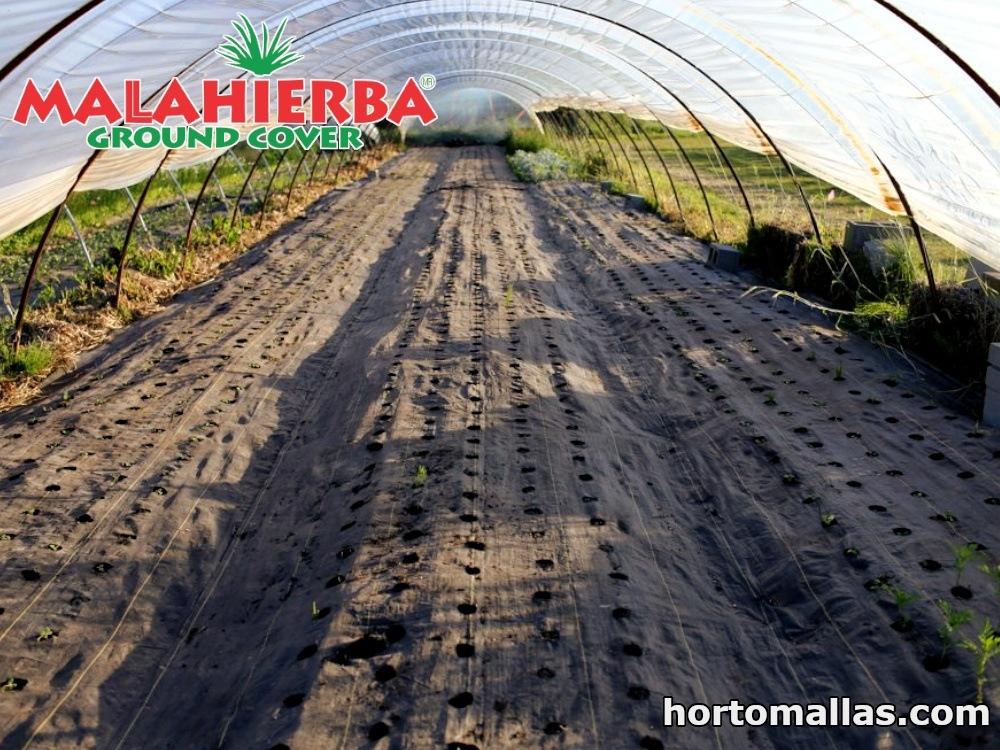 Uso de la malla groundcover para invernaderos