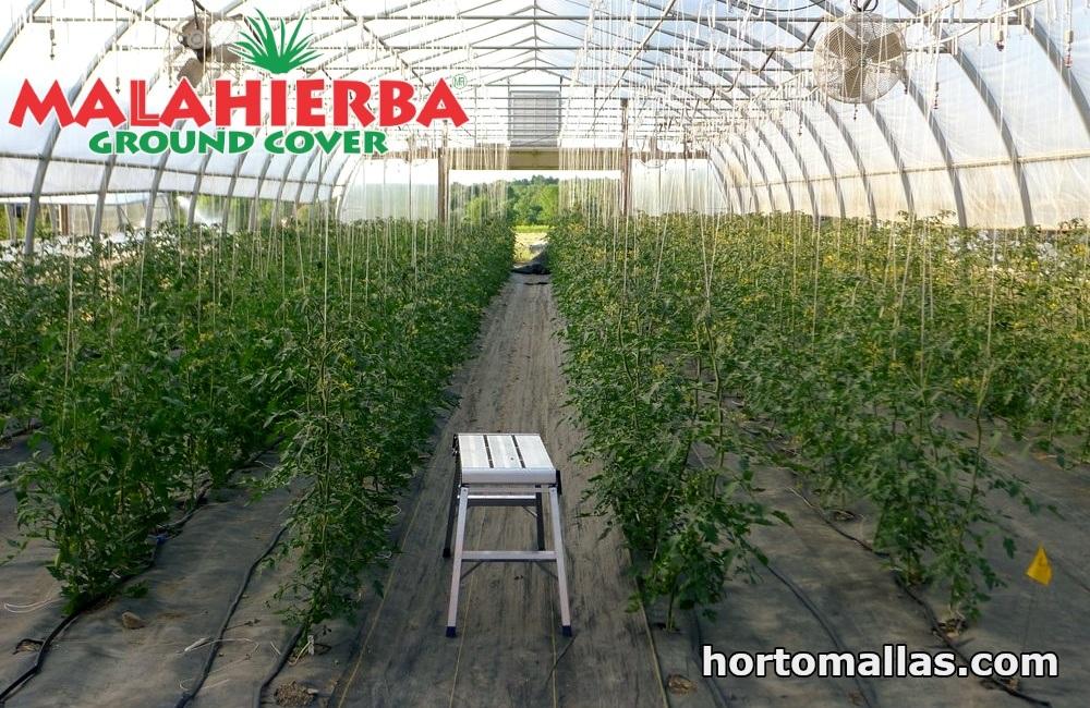 Malla groundcover para invernaderos