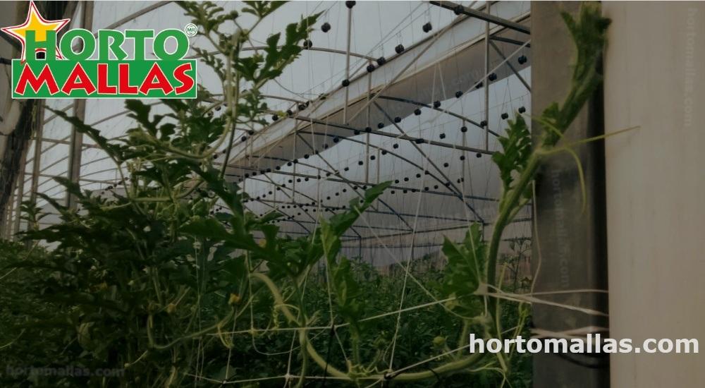 Malla tutora y rotación de cultivos.