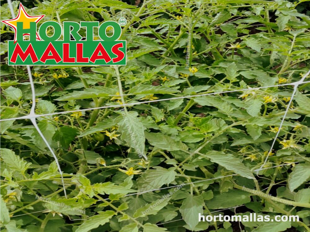 Malla espaldera en cultivos de tomate.