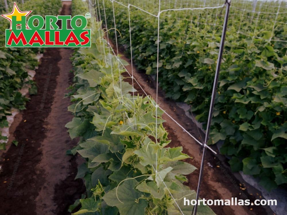 tutorado en hortalizas