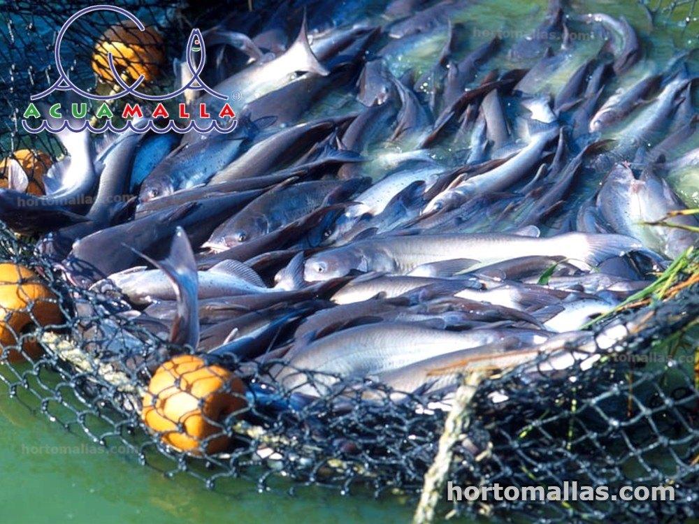 peces en malla ACUAMALLA