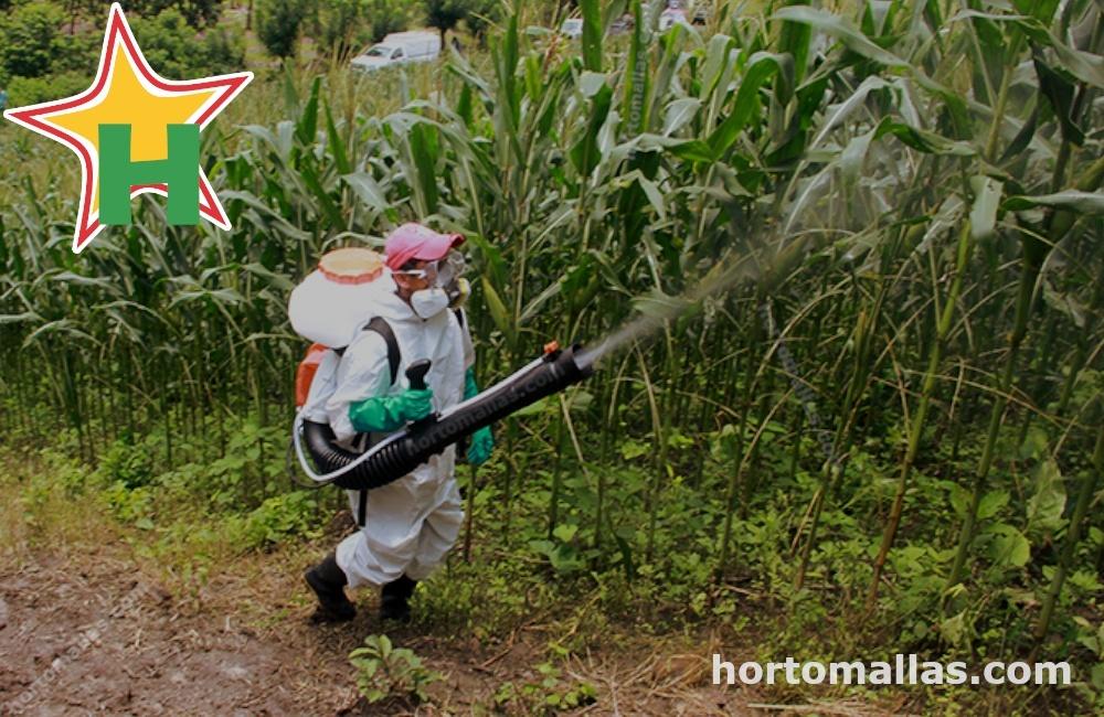evitando contagios a hortalizas