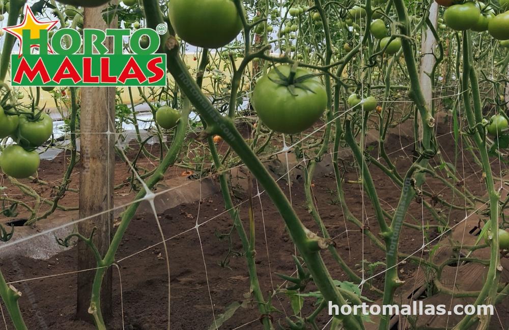 La temperatura es importante para el crecimiento de las plantas.