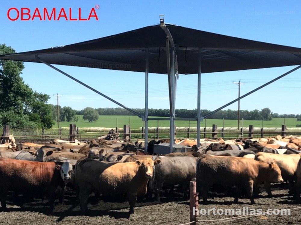 malla sombra raschel para vacas
