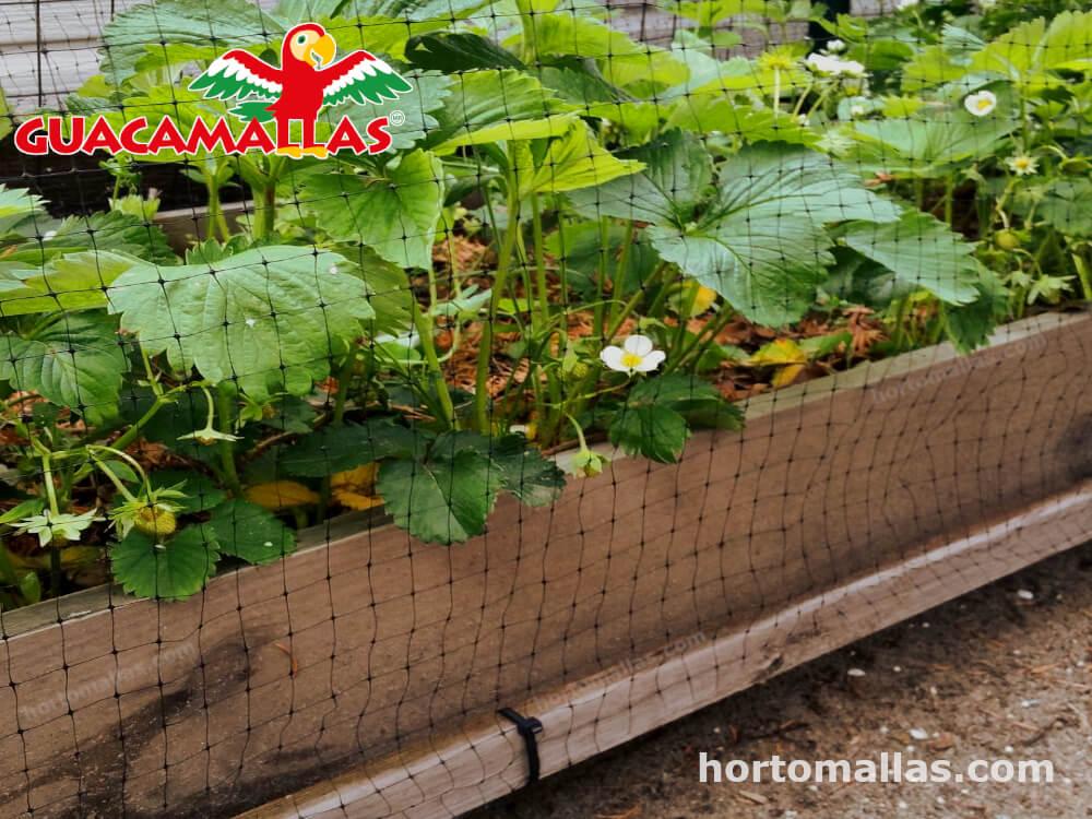 guacamalla para prevenir daños de los pajaros