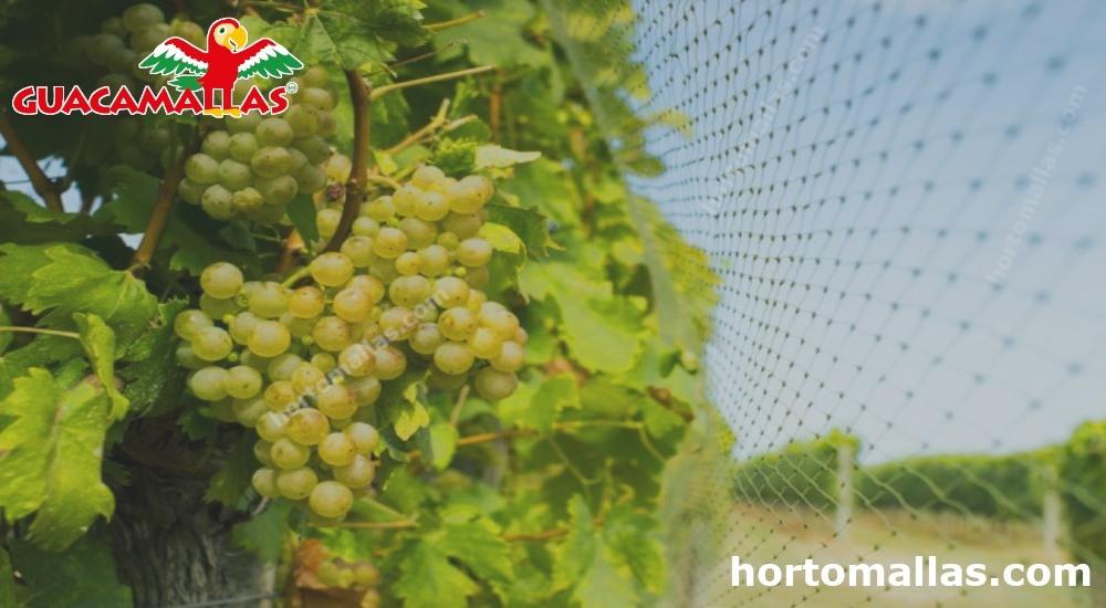 malla anti viñedos