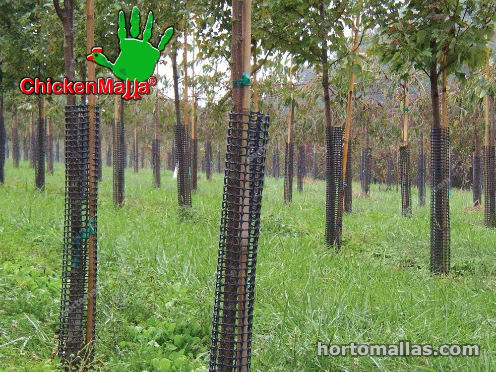 chickenmalla ayudando a la Reforestación