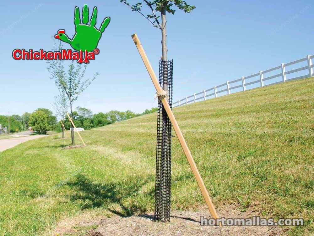 chickenmalla protegiendo a un árbol de ataques externos