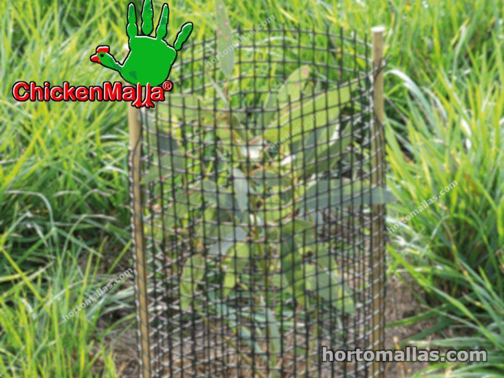 chickenmalla protegiendo unas plantas