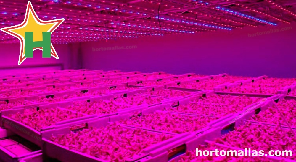 cuando no se utilizan las luces led el crecimiento de tu cultivo se desperdiciara