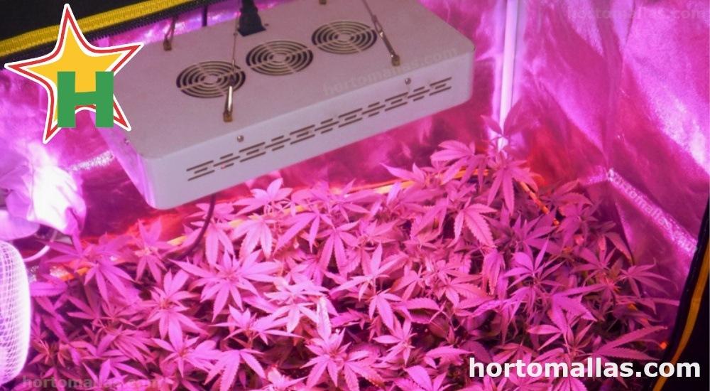 manipular el tamaño de las plantas es beneficioso para un jardín con luces LED.