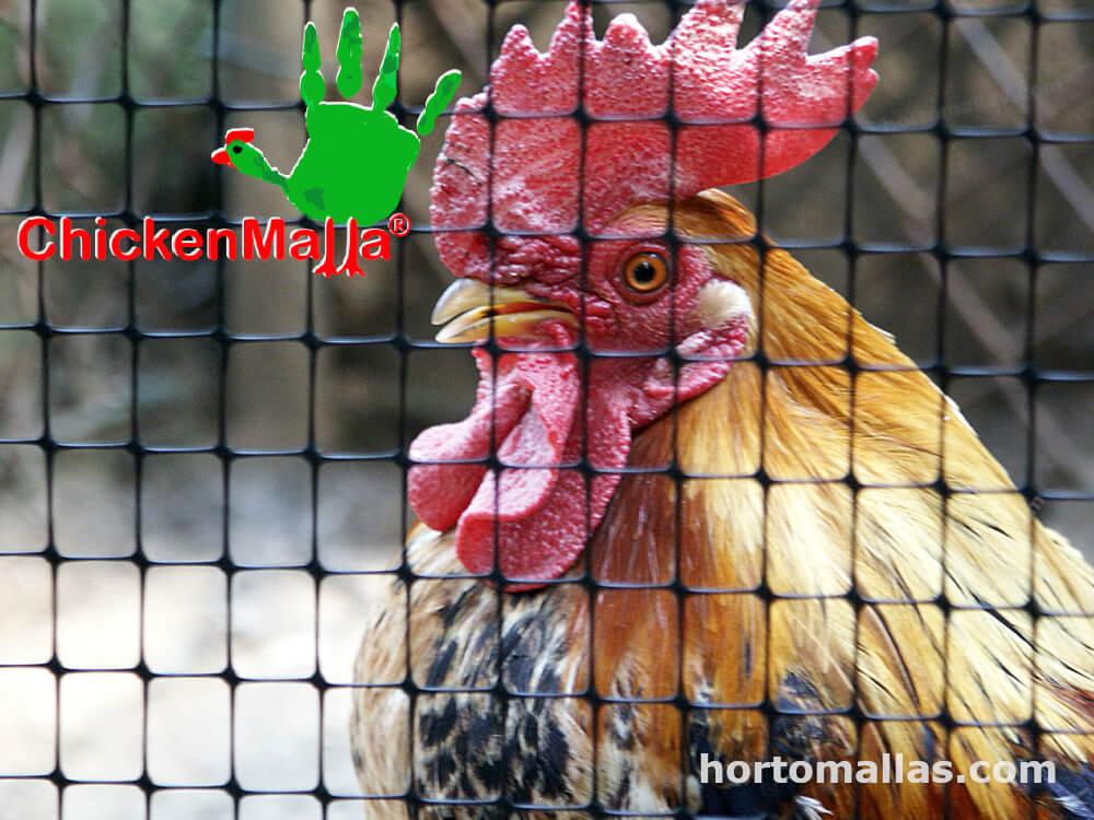 malla gallinera protege a tus gallinas