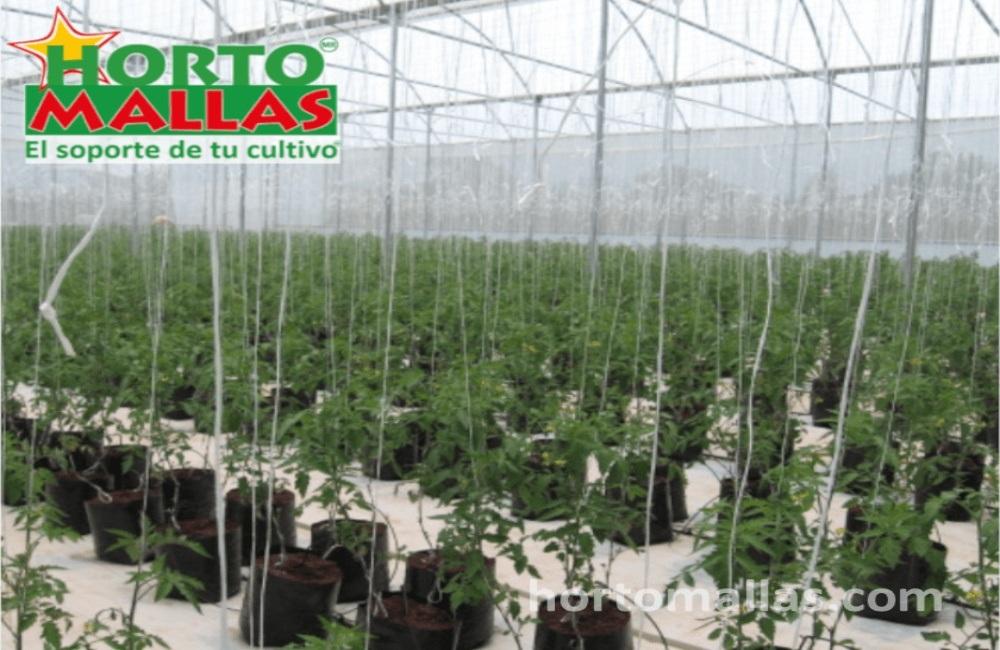 En la imagen se observa un cultivo de hortalizas.