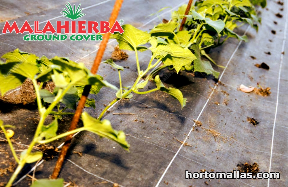 With anti weed barrier fabric, the use of herbicides, or any substance which is toxic for crops, is avoided.