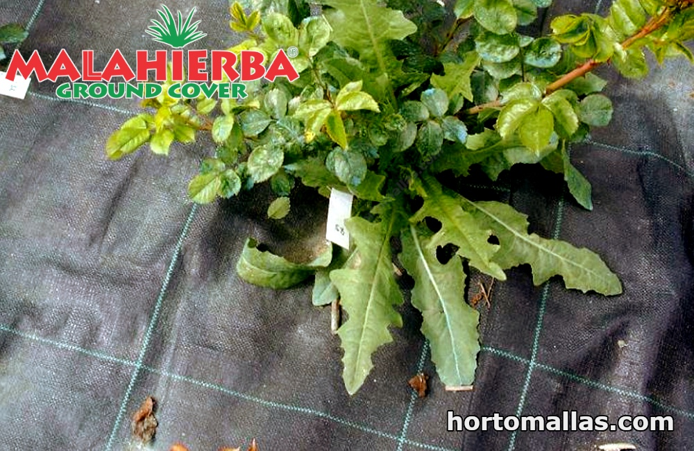 The installation process for anti weed barrier fabric is very simple. What's more, the fabric adapts easily to any type of soil.