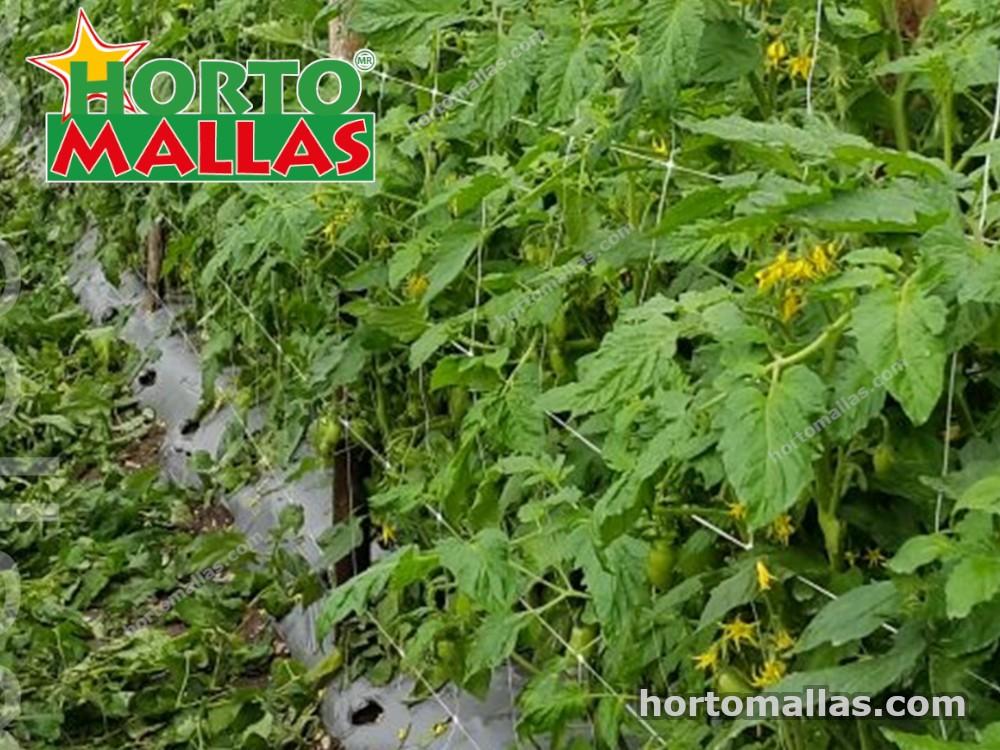 Malla espaldera Hortomallas en cultivo