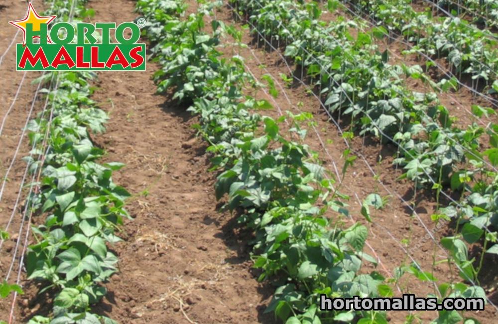 cultivo con malla plástico Tutora