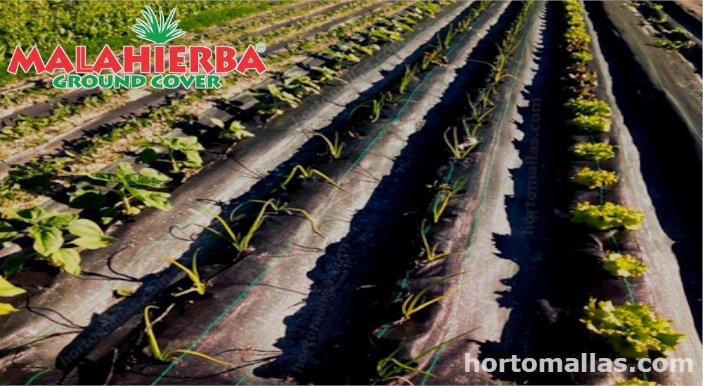 cultivo protegido con tejido ground-cover.