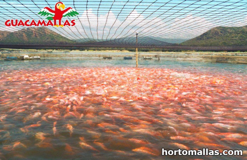red anti-aves en estanque de peces