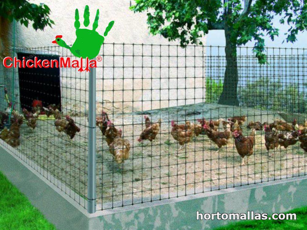 Corral de pollos