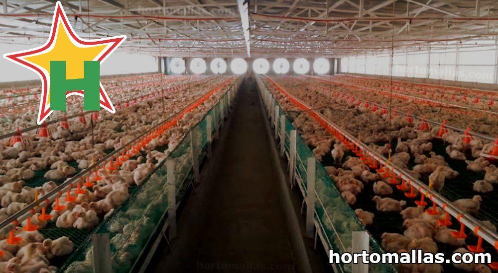 mala para pollos