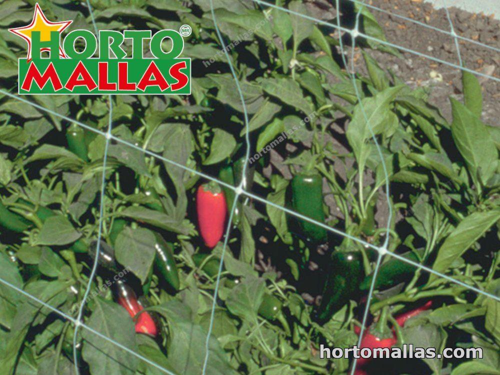 cultivo de chiles con malla