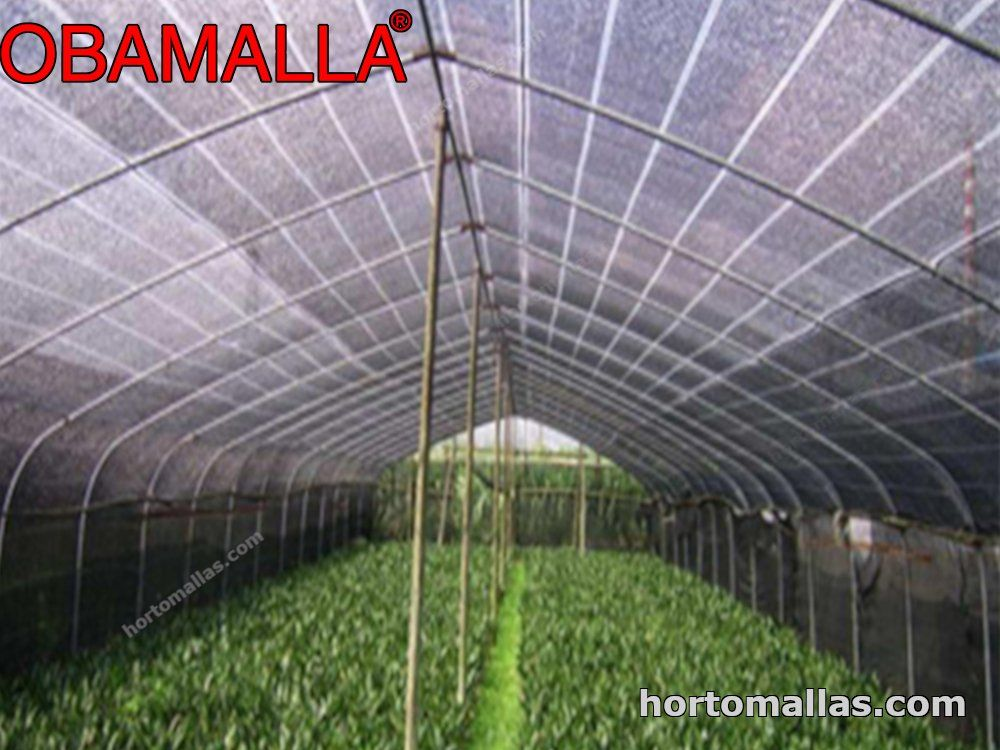 media-sombra OBAMALLA®