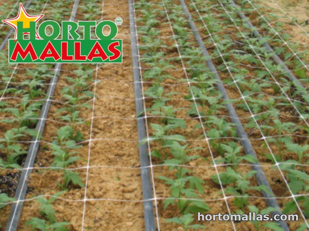 cultivo de claveles con HORTOMALLAS