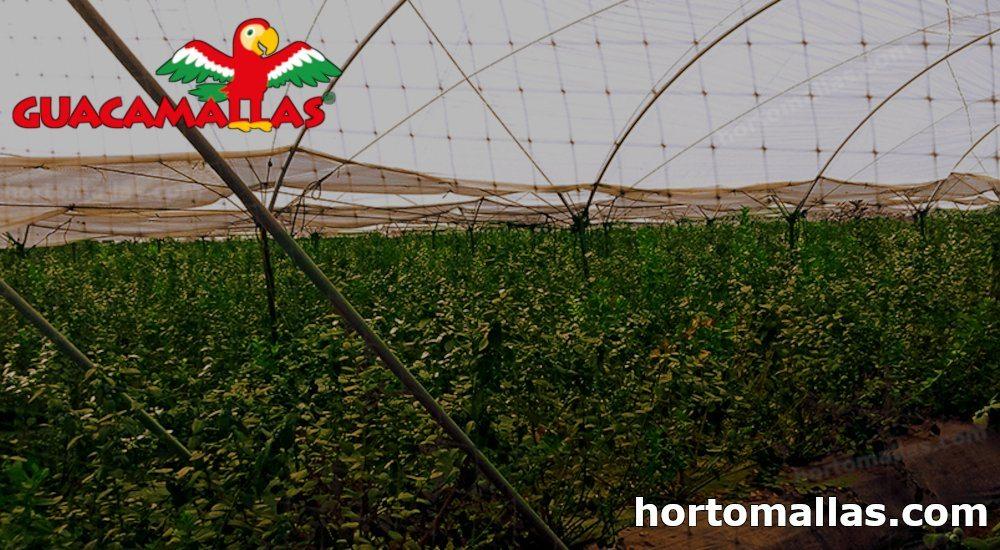 GUACAMALLAS® para protección de cultivos.