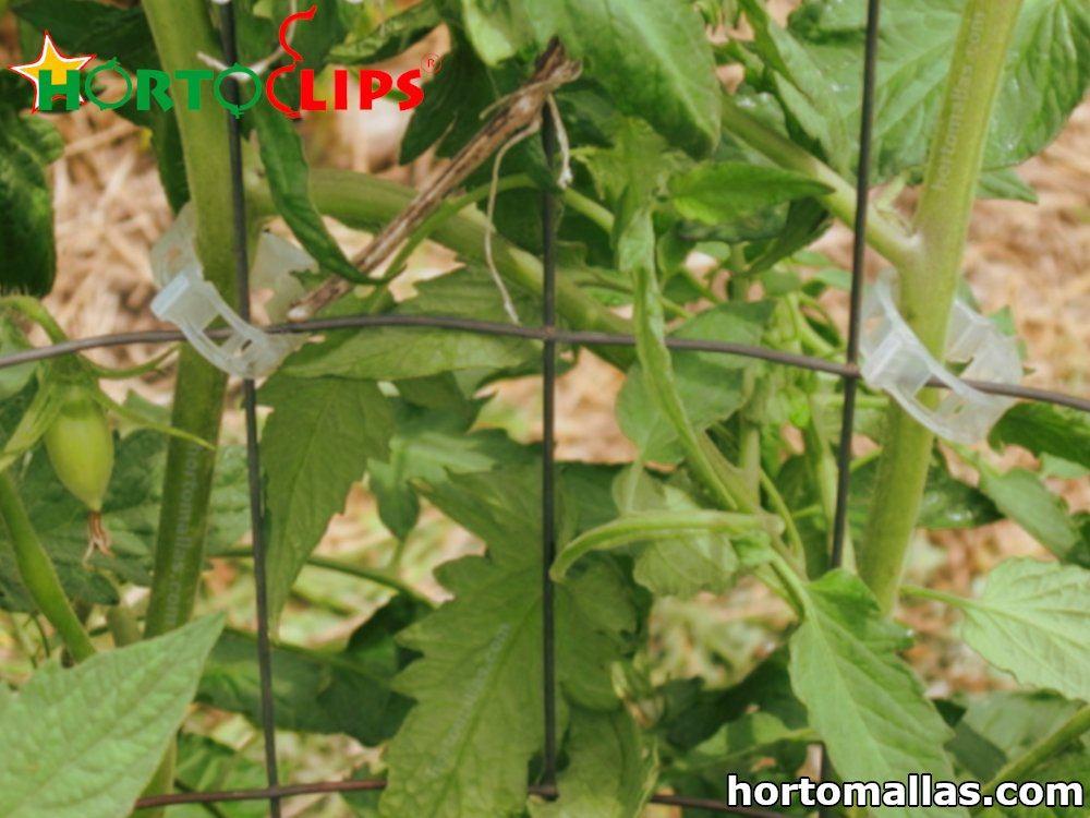 clip para tomates
