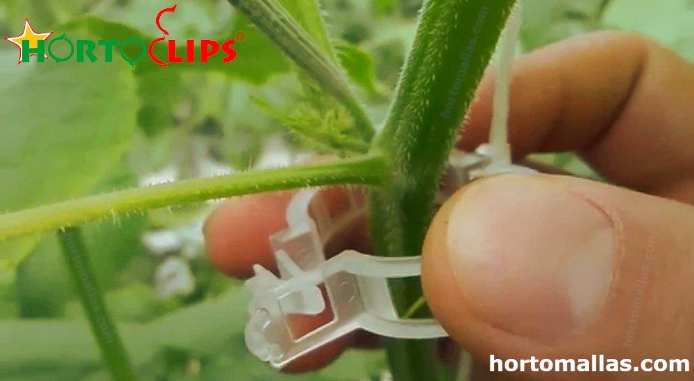 anillo tomatero