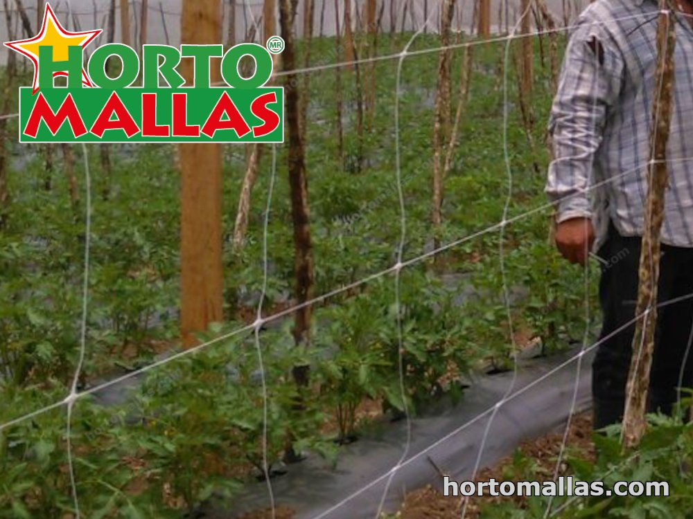 agriculture wuth HORTOMALLAS