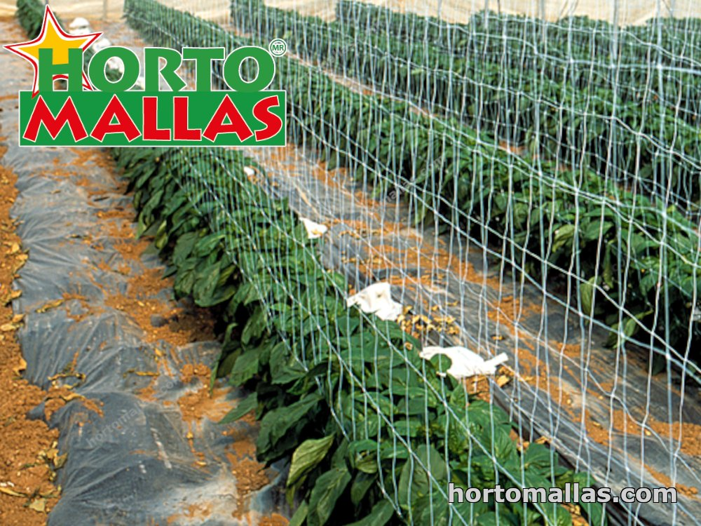 Mesh backing for the cultivation of chili pepper.