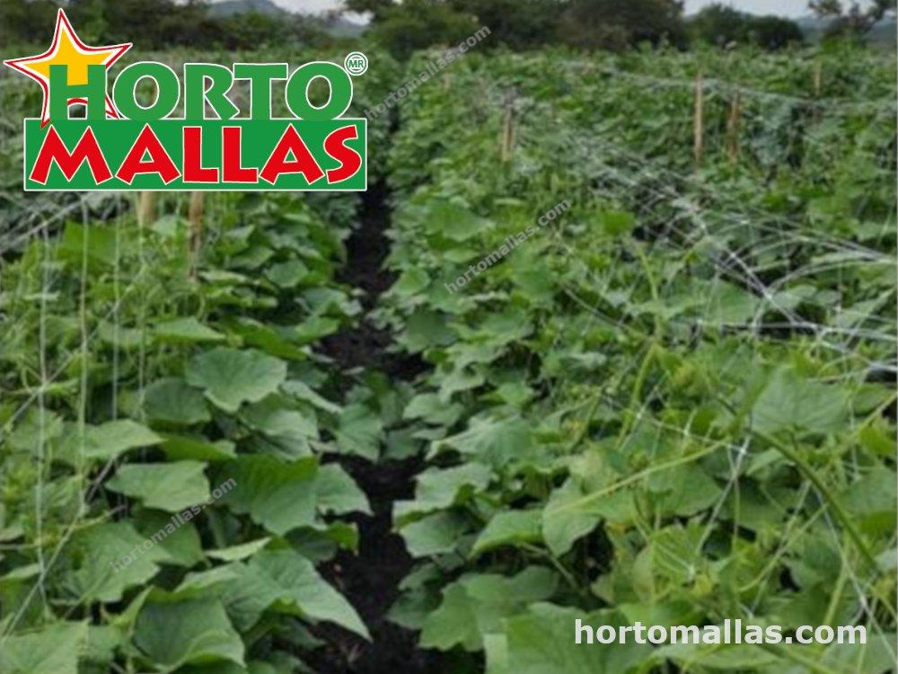 Melon plants with HORTOMALLAS