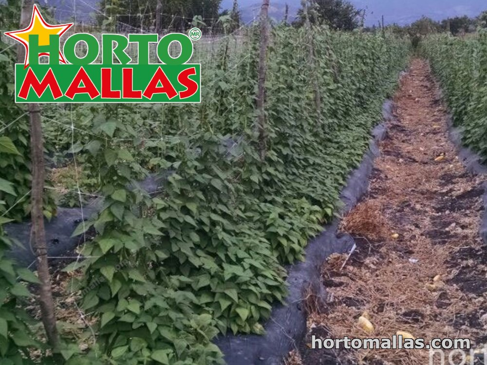 crop rotation HORTOMALLAS® netting