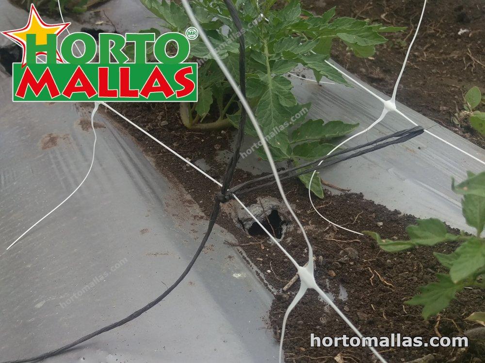 tomato trellis net netting