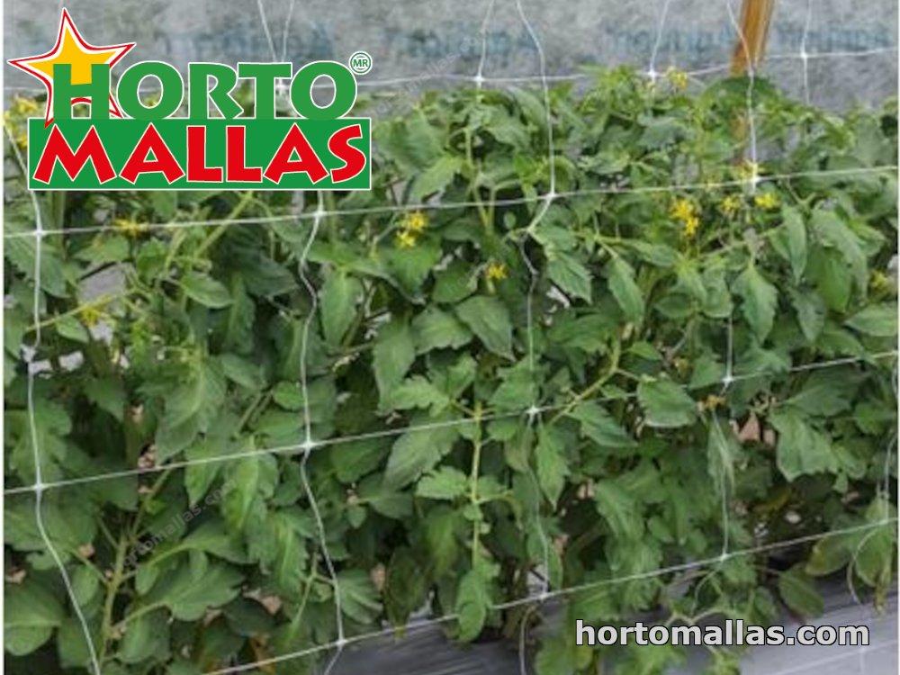 Prevent virosis using trellis net HORTOMALLAS®