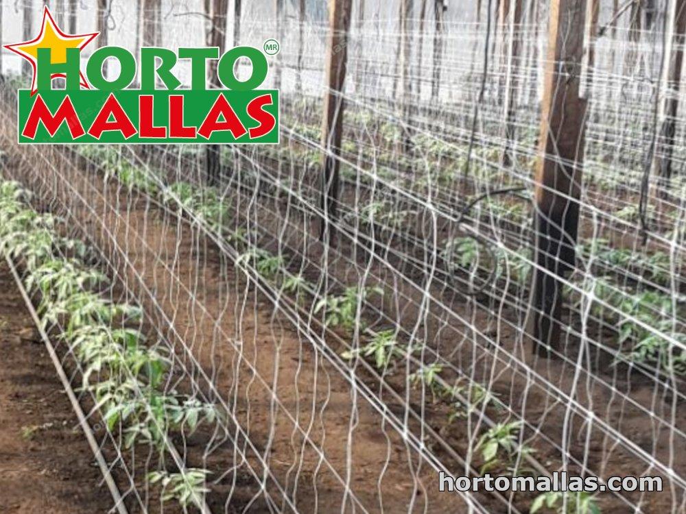 Lattice mesh in greenhouse