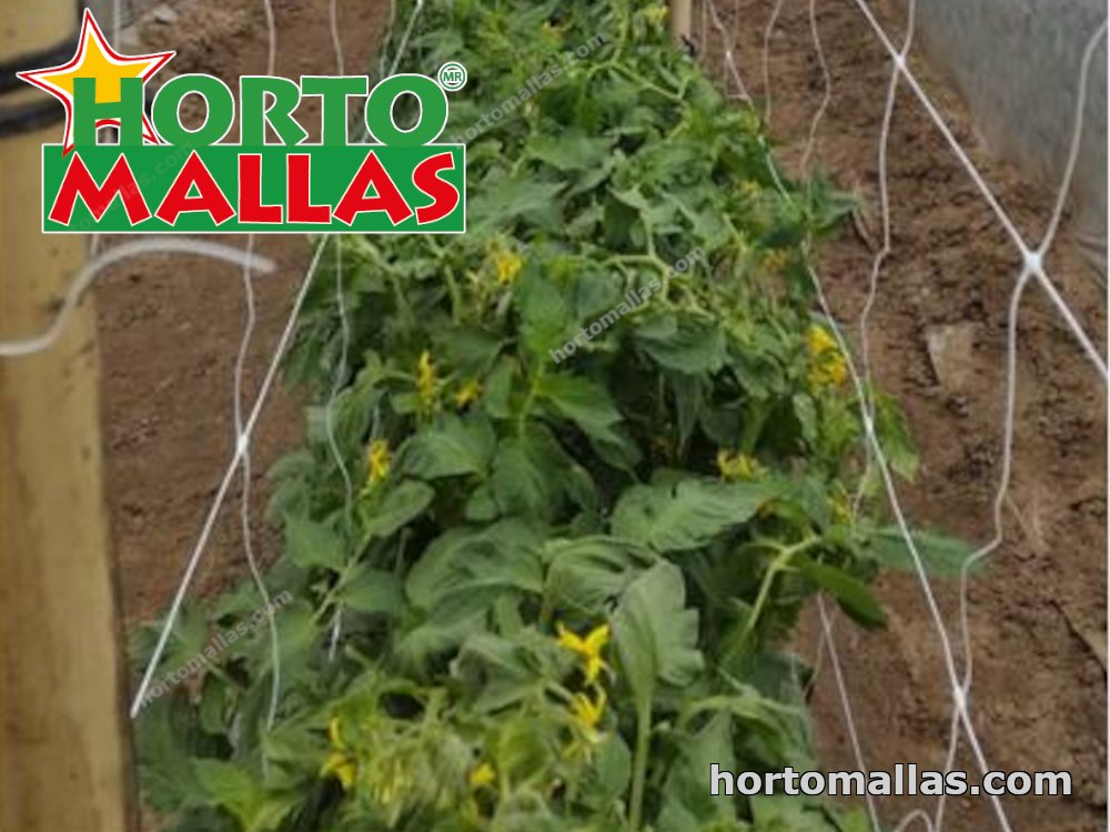 HORTOMALLAS® mesh installed in crop