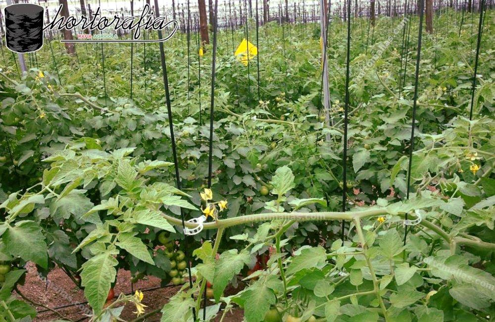cultivos con rafia