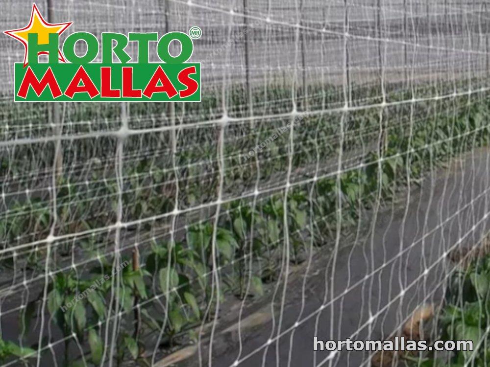 crop espalier with netting