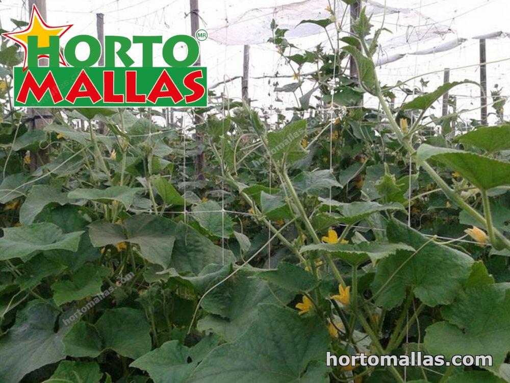 vegetable support netting