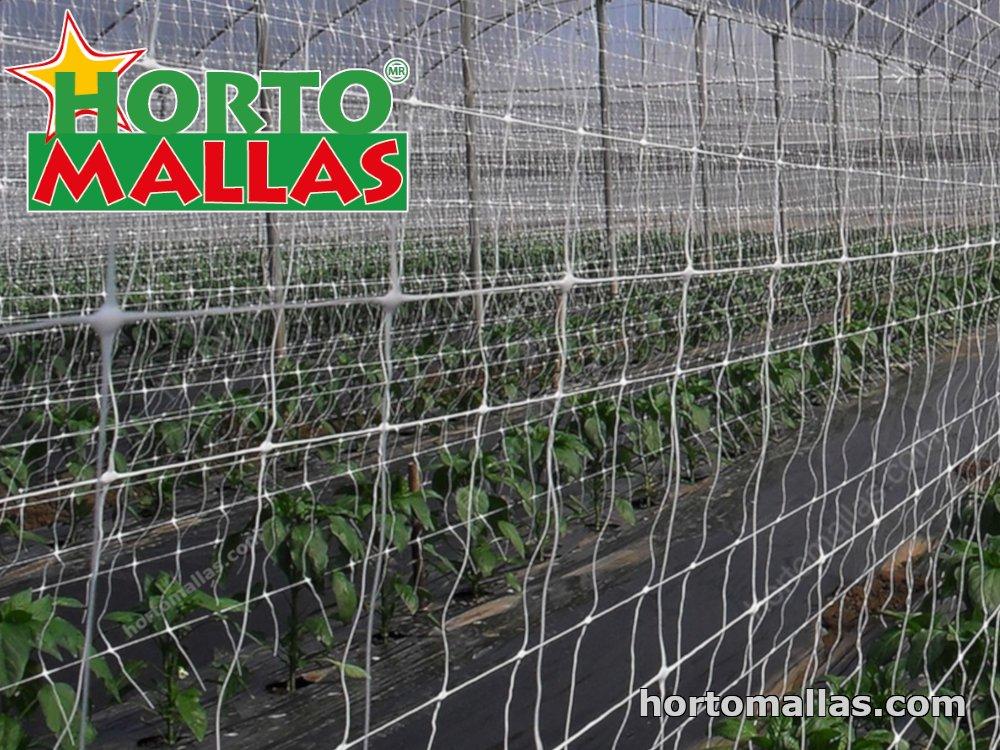 Trellis netting in greenhouse