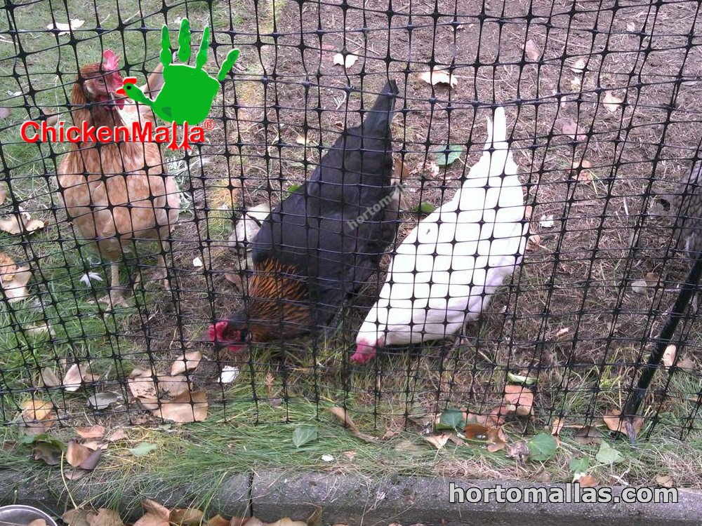 Mesh for brids and chickens