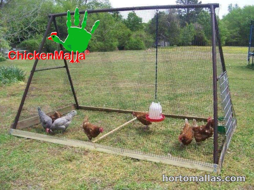 chickens inside of chicken tunnel