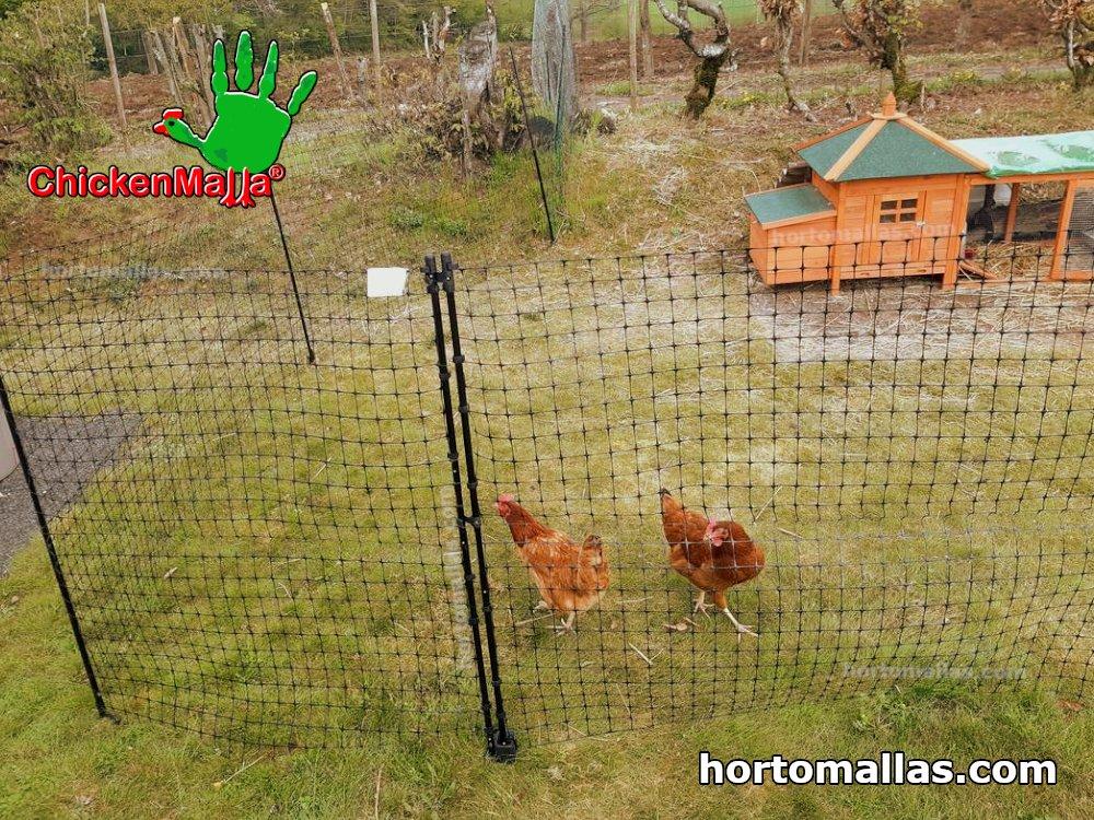 grassland hens