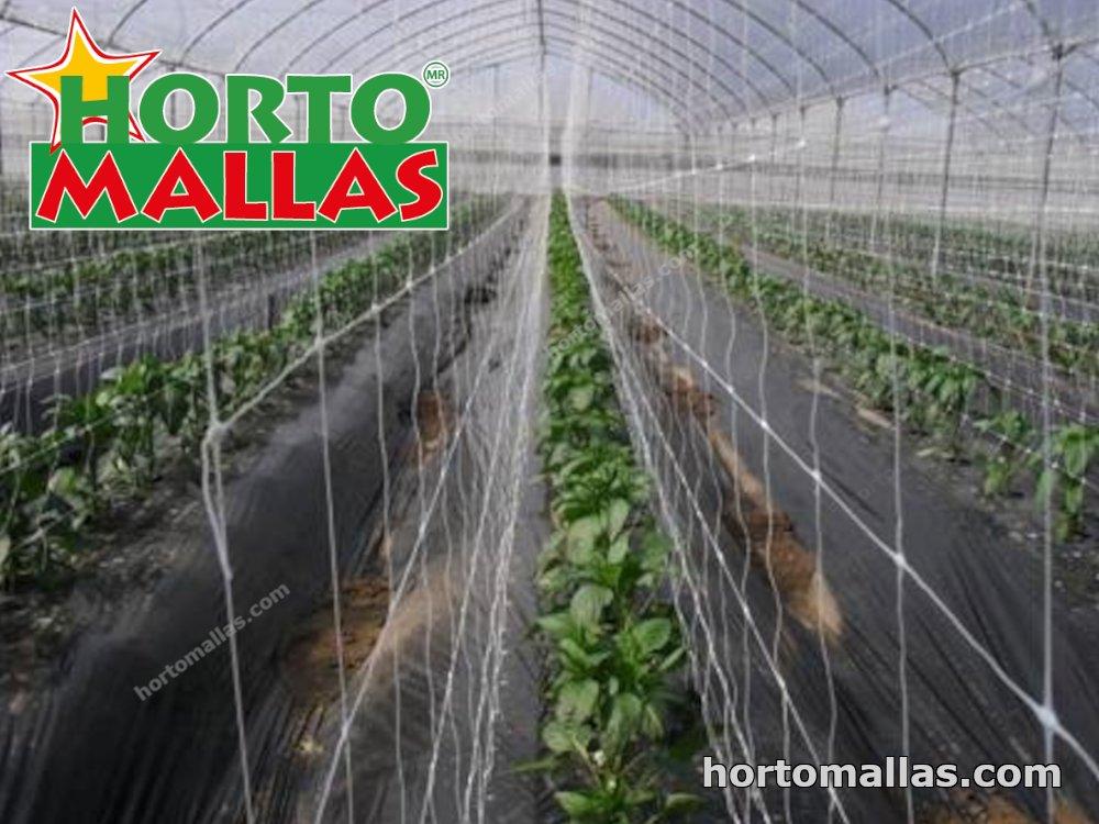 Growing net inside a greenhouse