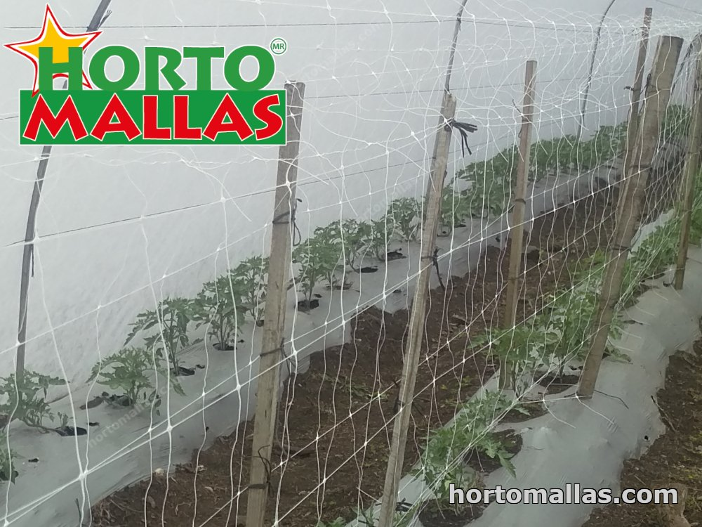 support net in tomatoes
